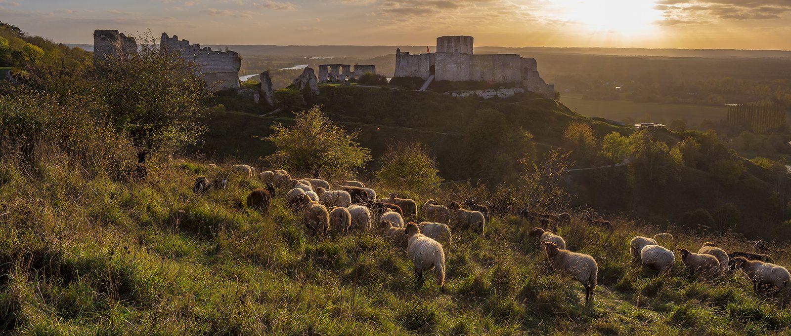 Les pâtures de Chateau-Gaillard - Les Andelys-©AquaCalypso